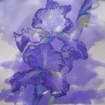"<font size=7 color=""#ff0000"">&#9679;</font>SOLD </br>It's Iris Time </br>5/17/15 New York, NY </br>purple ink, charcoal, pastel </br>posted 5/18/15  5:00pm"