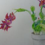 Christmas Cactus ​11/25/15 New York, NY watercolor, graphite, colored pencil, pastel posted 5:15pm 12/03/15