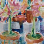 Pink Amaryllis 12/02/15 New York, NY watercolor posted 1:30pm 12/09/15